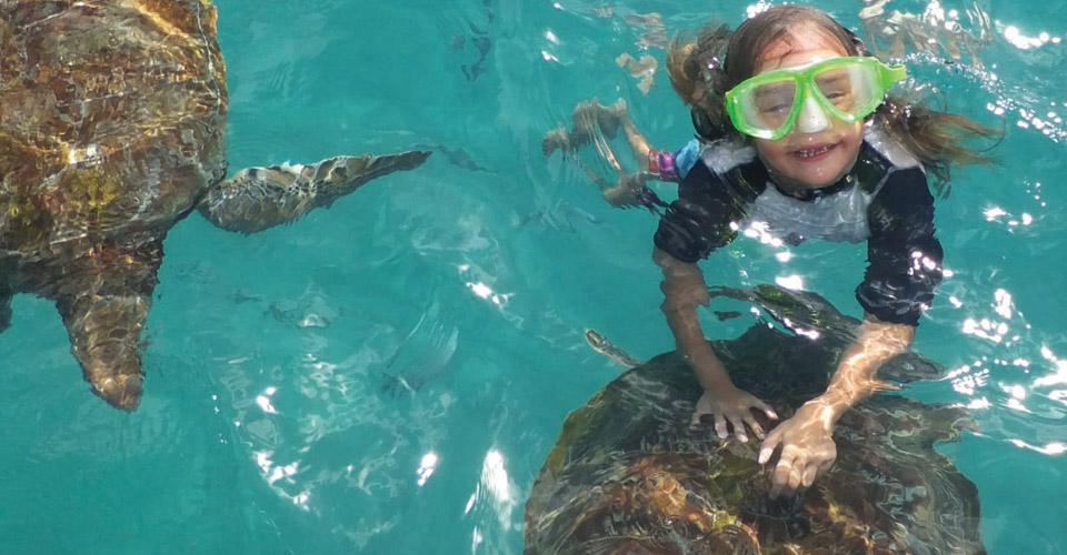 Family Friendly Resorts - girl swims with turtles in Barbados