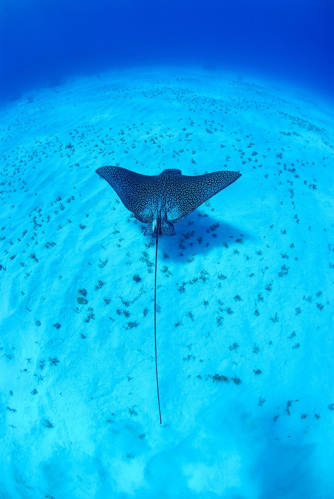 Fish Don't Swim, Fish Fly! Cayman Islands Diving at Stingray City