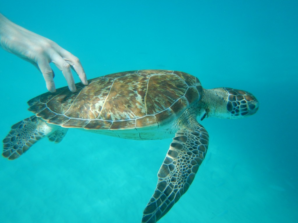 A hand touching a submerged turtle