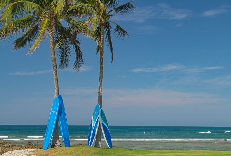 Surf Boards balanced at rest on palm trees by the beach