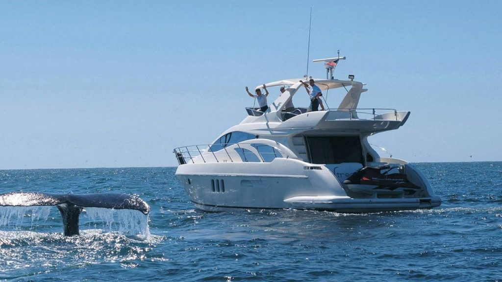 The tail of a whale breaks through the water by a whale watching yacht from Punta Mita