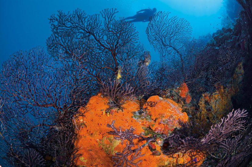 A diver swims past some bright orange coral