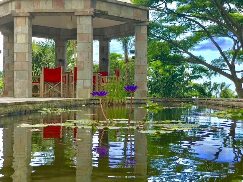 Iridescent purple lillies sprout from the water feature at the Golden Rock Plantation House in Nevis