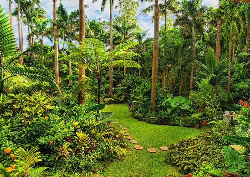 The vibrant green foliage at Hunte's Garden in Barbados