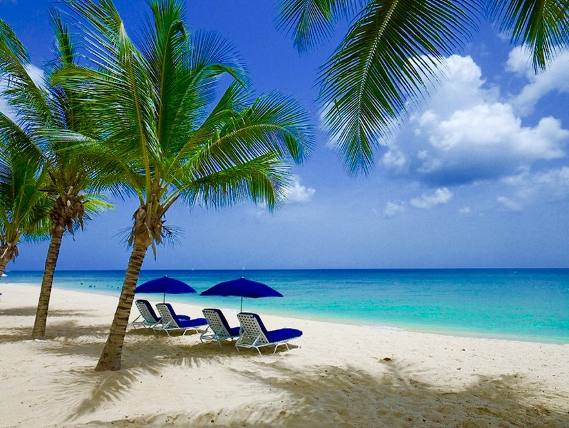 Sun loungers on Paynes bay beach shaded by leaning palm trees