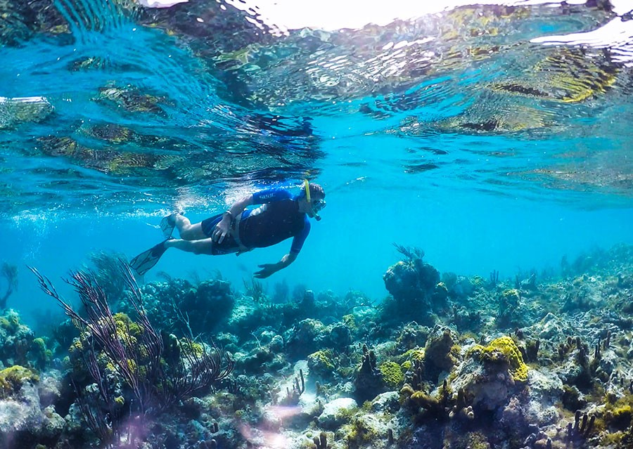 Snorkeling at Turks and Caicos