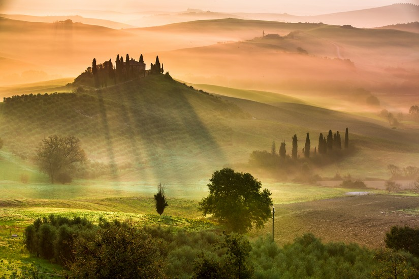 The dawn warms mist draped olive groves in Tuscany