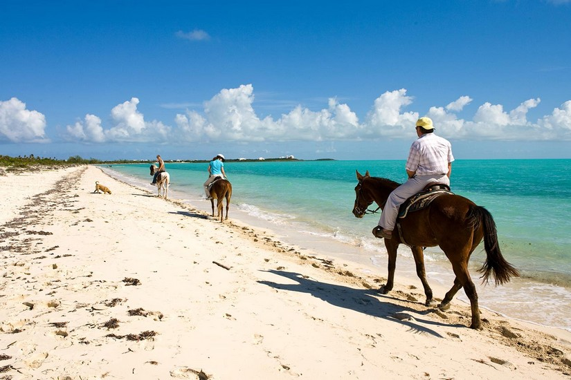 Three horses calmly convey their riders along the waterline on a beach in Grand Turk. Nearby a golden labrador noses about in the sand, having a good old sniff.