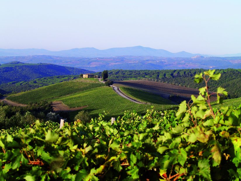Rolling green hills and olive groves in Tuscany