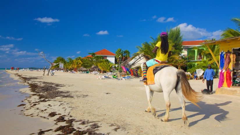 Where to go in Jamaica? It doesn't really matter as long as you do it on a feisty horse