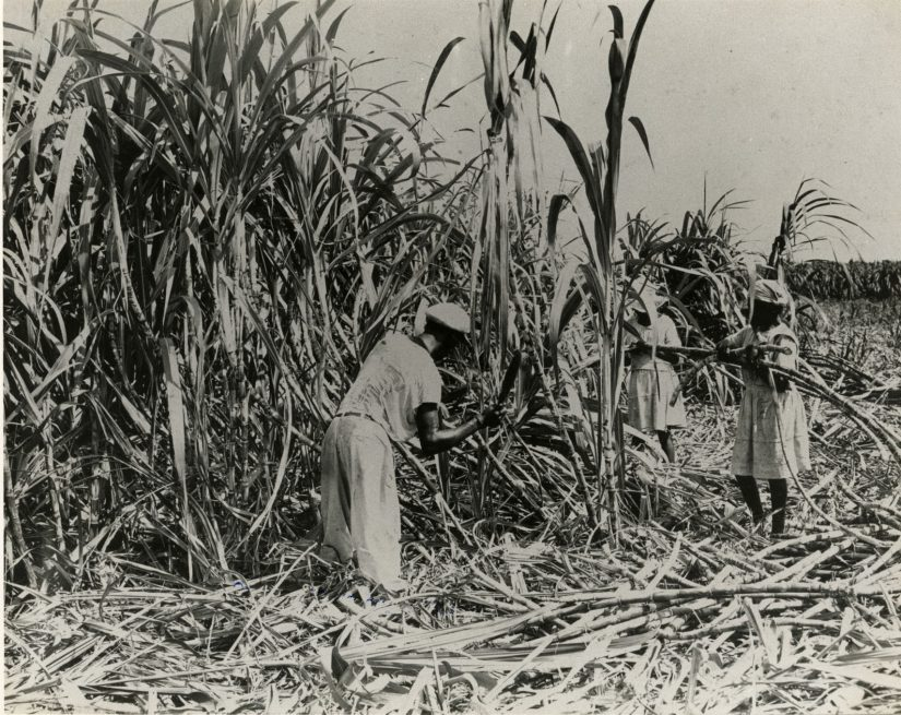 Slavery In Jamaica due to the large Tobacco and Sugar plantations