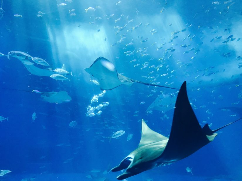 Bahamas fishing trips are great fun for you and your loved ones as you experience the sea creatures of the Caribbean