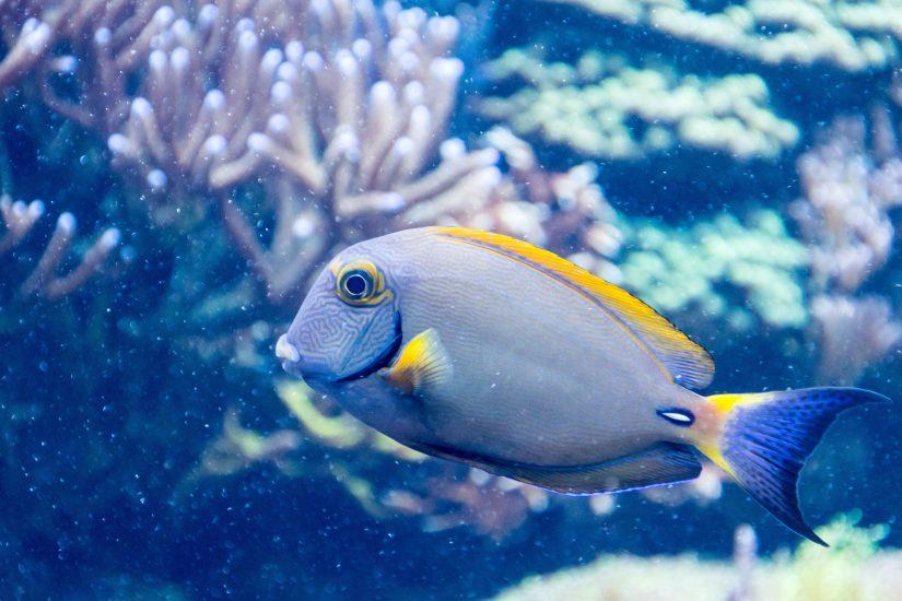 Bahamas fishing regulations keeps fishing levels at a safe and environmentally friendly balance.