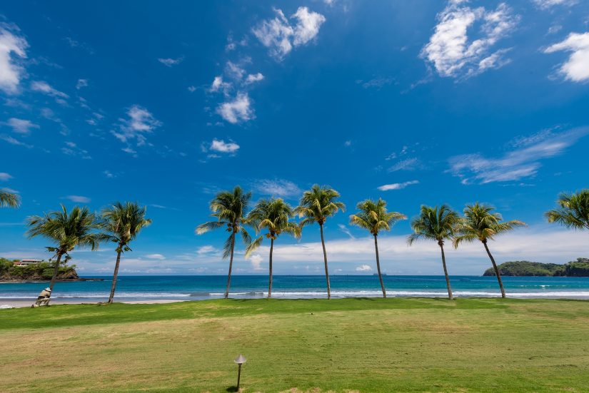 A big line of palm trees with the sea soaring off into the distance