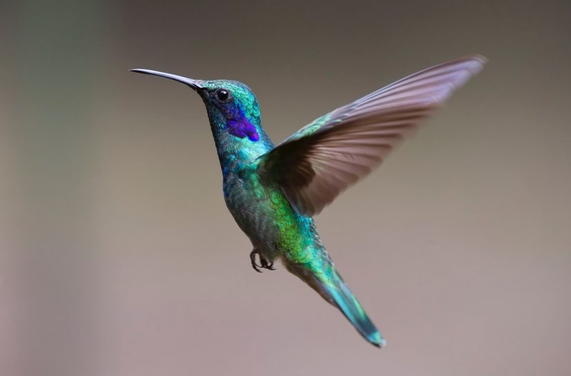 A close up of a hummingbird