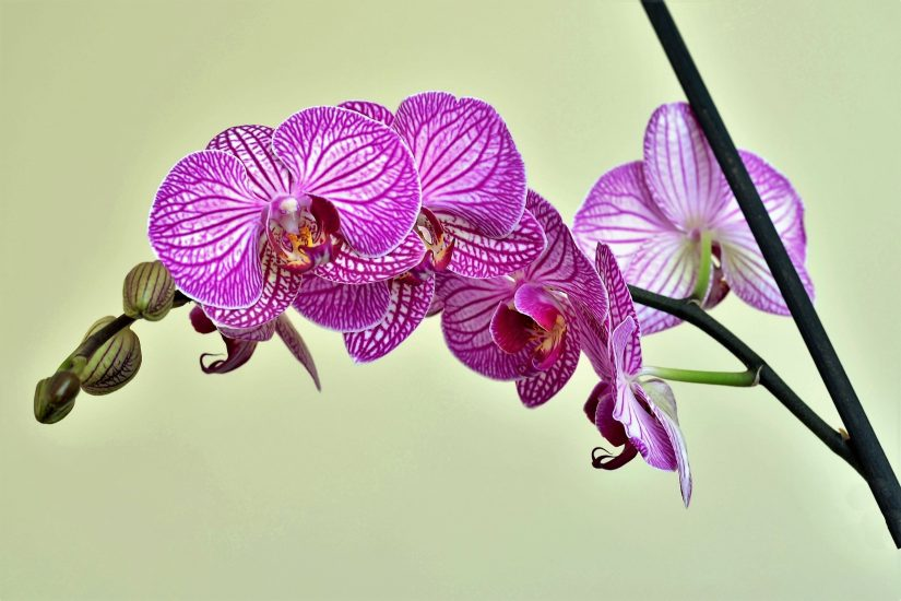 A cluster of penetratingly purple orchid flowers