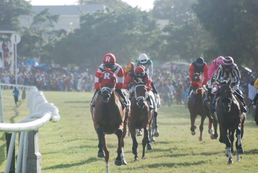 Horses and Jockeys wildy race towards the finish line at the Barbados Golden Cup