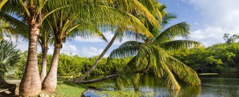 Grand Cayman island provides you with a tropical paradise, laced in vivacious greenery and dotted in tropical flowers