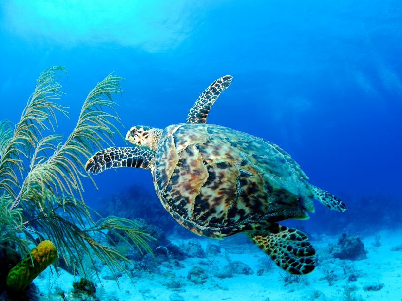 The best things to do in grand Cayman are found under the surface of the dazzling Sea. Explore the crystallized waters and colorful reefs below.