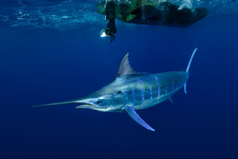 Discover a wide variety of species as you go fishing Turks and Caicos