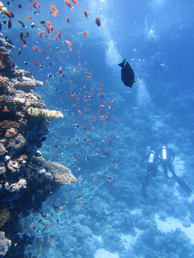 Enjoy the islands many water sport facilities as you part take in shore diving grand Cayman