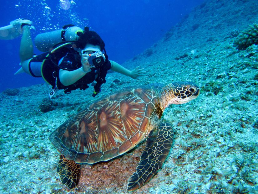 These waters hold a plethora of creatures to see while scuba diving grand Cayman