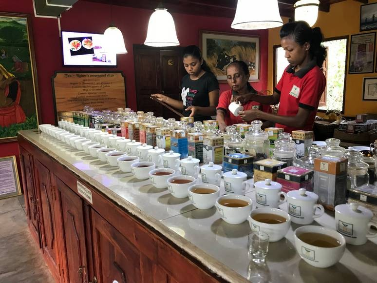 A tea tasting in Sri Lanka