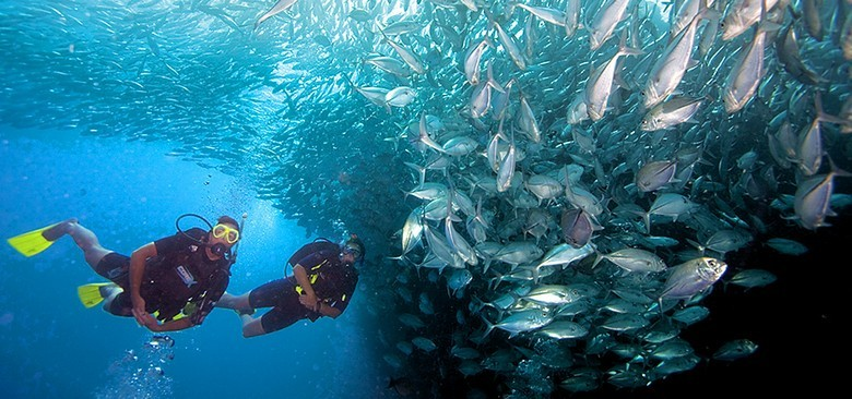 Scuba divers swim close to a massive, glittering shoal of tropical fish