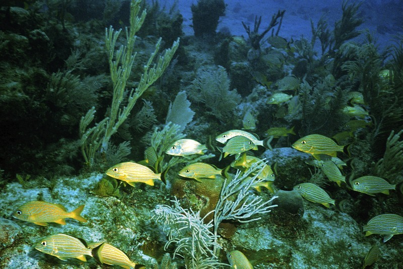 Marine life is abundant at the islands of Turks and Caicos